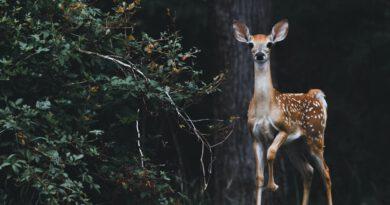 Die Polizei Wasserburg gibt Hinweise zum richtigen Verhalten bei einem Wildunfall